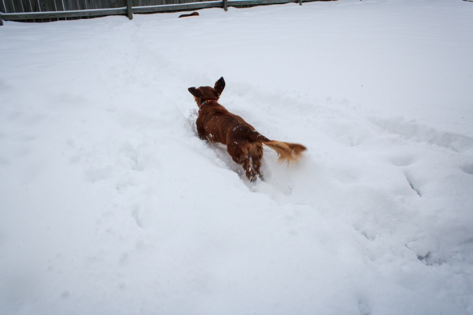 Ginger chasing Jessie