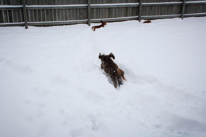 Sophie chasing Ginger
